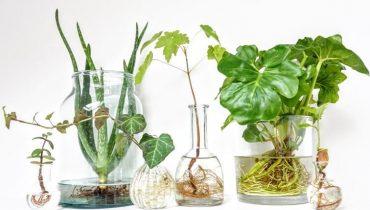 Các loại cây trồng trong nước