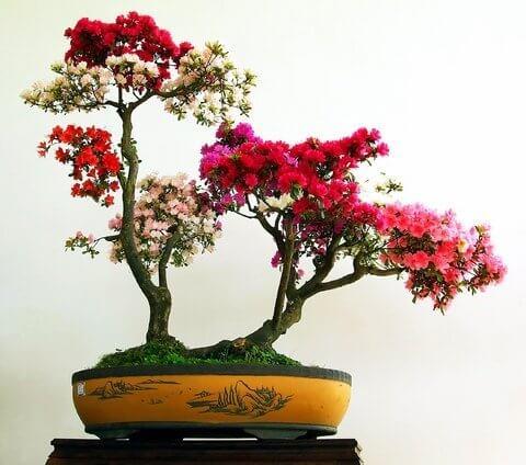 cây hoa giấy và phong thủy