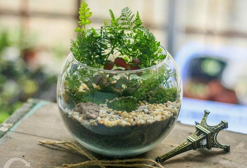 trồng cây cảnh trong lọ thủy tinh