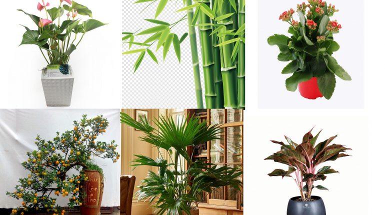 Giới thiệu các loại cây trồng thanh lọc không khí trong nhà