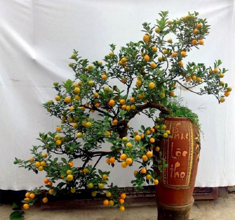 cây họ cam quýt