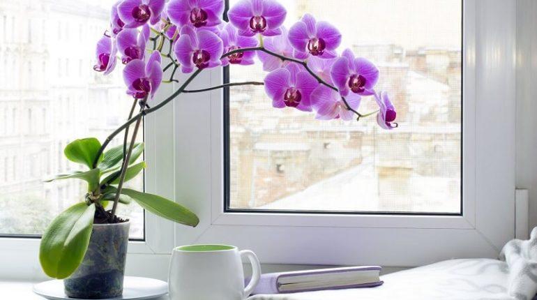 các loại lan trồng trong nhà