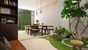 cây lá to trồng trong nhà