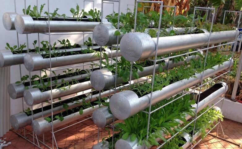 các loại rau dễ trồng