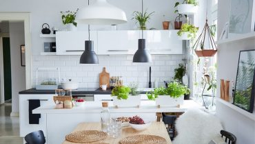 cây trồng trong bếp