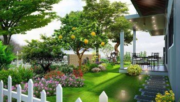 nên trồng cây an quả gì trước nhà