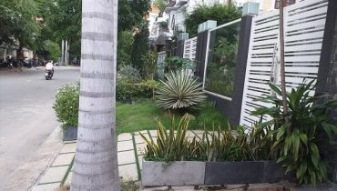 nên trồng cây gì ở vỉa hè trước nhà