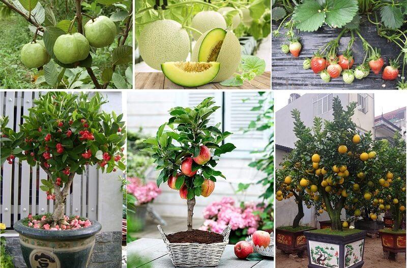 cây ăn quả dễ trồng nhất