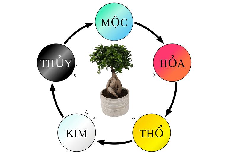 cây hạnh phúc hợp mệnh gì