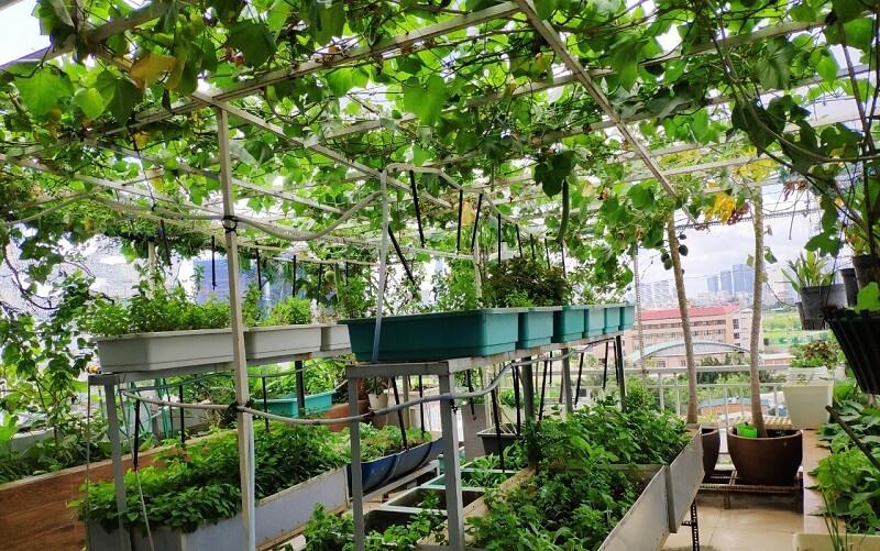 mùa hè trồng rau gì
