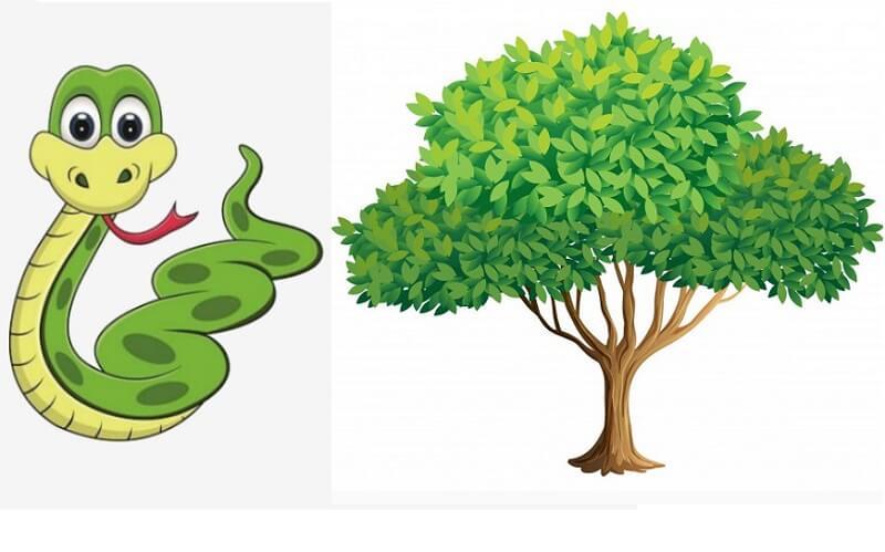 tuổi tỵ hợp với cây gì