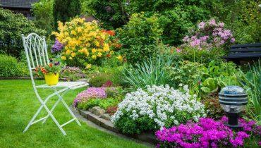 các loại hoa đẹp trồng sân vườn