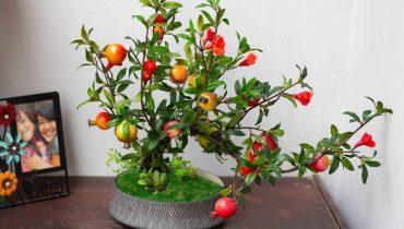 cách trồng cây lựu