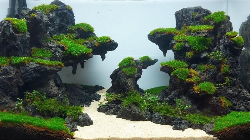 cách trồng cây thủy sinh trên đá