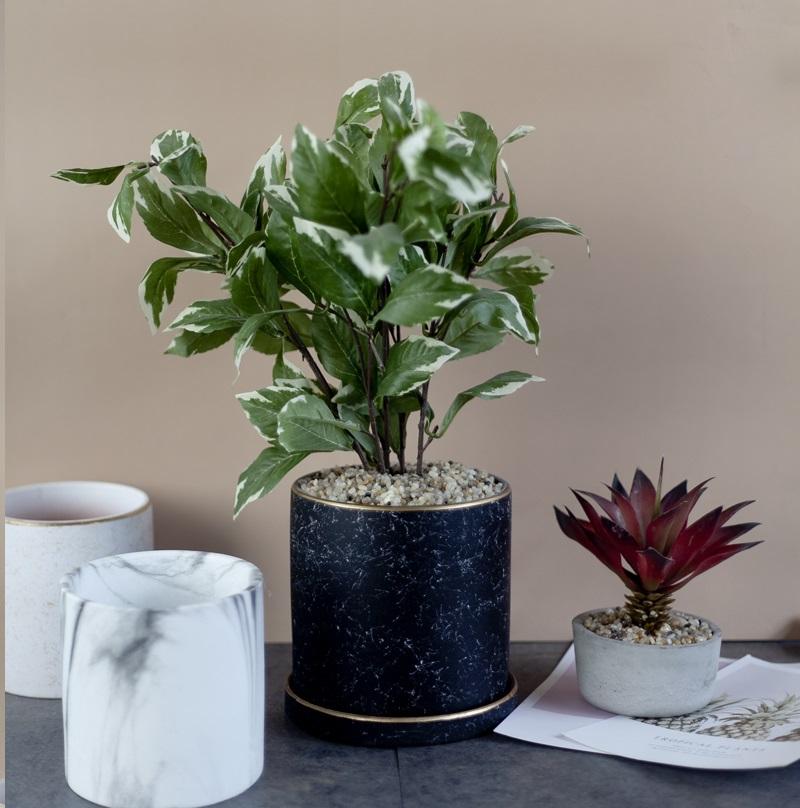 cây cẩm thạch