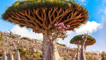 cây cảnh độc lạ