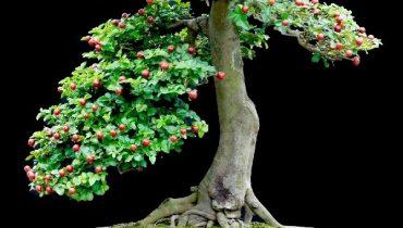 cây kim quýt