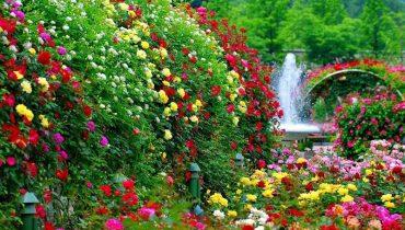 các loài hoa nhiều màu sắc