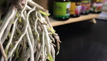 cách sử dụng thuốc siêu ra rễ